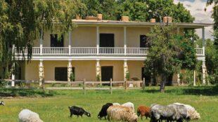 Goats and sheep graze in Casa Grande's lush meadow.
